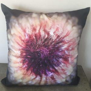Protea Cushion