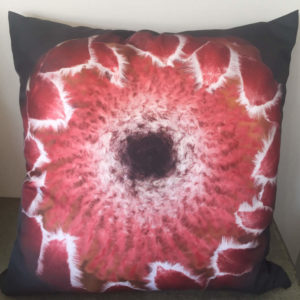 Pink Traditional Protea Cushion