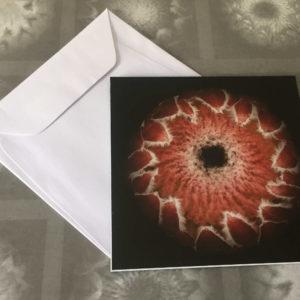Protea Card 10